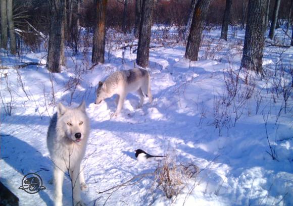 info wolf road park