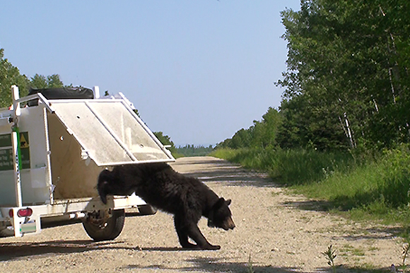 Bear is released