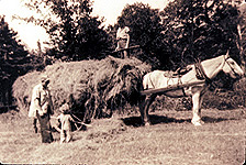 A horse pulls a cart loaded with hay at the Pleasant Bay warden station in 1946.
