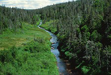 A narrow stream winds through the boreal forest.