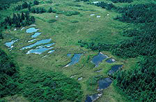 An aerial view of the Taiga, showing patches of stunted forest separated by bogs and small ponds.