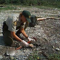 Park Warden gathering a sample of soil tainted by hydrocarbons