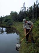 Park Warden gathering samples with a net out of a water lake.