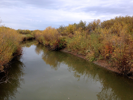 Leaves changing colors in the fall along the Frenchman River.