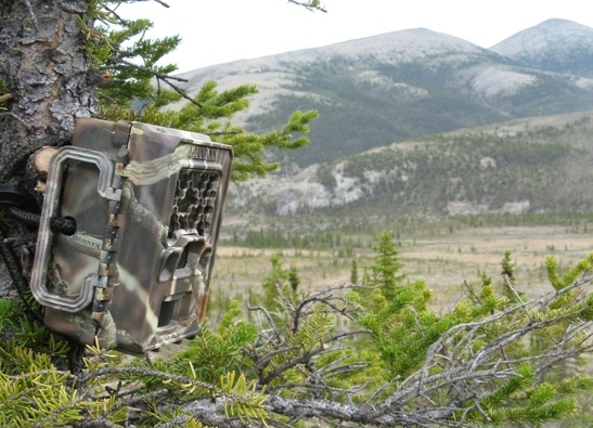 Camera strapped to a spruce tree with mountains in the background.