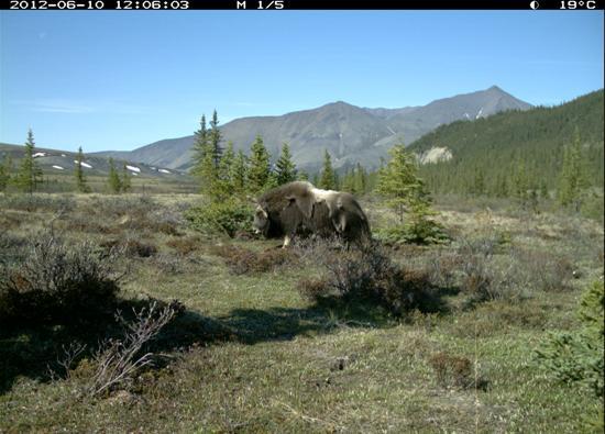 ivvavik national park canada - photo #30