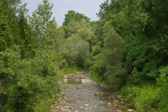 Wooded area and Stream