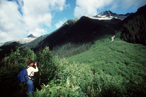An avalanche slope on the Balu Pass trail, Glacier National Park of Canada.