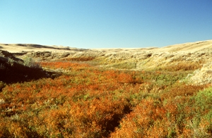 Mixed Grass Prairie, with the Badlands in the distance, Grasslands National Park of Canada.