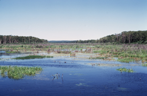 Wetland in the eastern section of Riding Mountain National Park of Canada