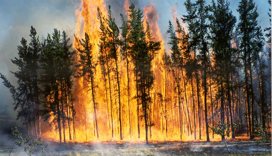 Crown fire resulting from a prescribed burn at Jasper National Park of Canada.