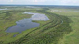 Picture of marshes produced by the meeting of the rivers Athabasca and Peace. One of the largest inland delta in the world.